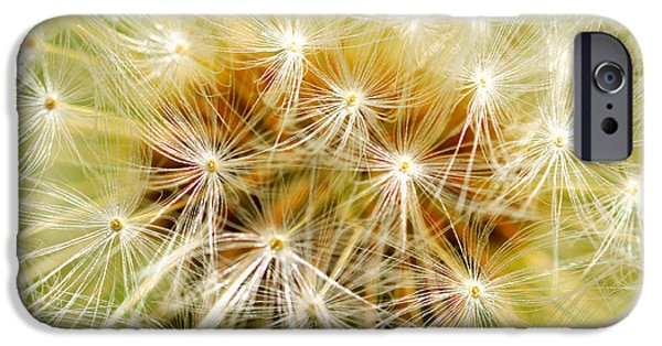 Flora Mixed Media iPhone Cases - Dandelion iPhone Case by Toppart Sweden