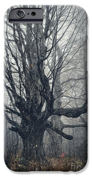 Bare Tree iPhone Cases - Dark Forest iPhone Case by HD Connelly