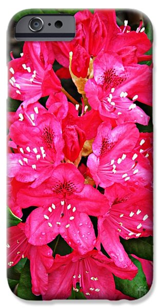 Dark Pink iPhone Cases - Dark Pink Rhododendron 2 iPhone Case by Sarah Loft