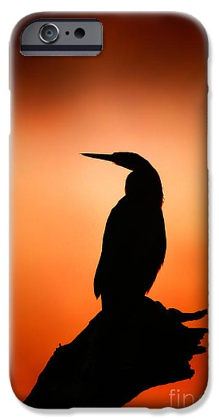 One Animal iPhone Cases - Darter silhouette with misty sunrise iPhone Case by Johan Swanepoel