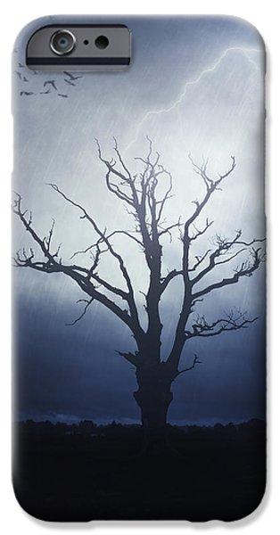 Creepy iPhone Cases - Dead Tree iPhone Case by Joana Kruse