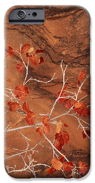 Slickrock iPhone Cases - Desert Plant Against Slickrock Wall Southern Utah iPhone Case by Dave Welling