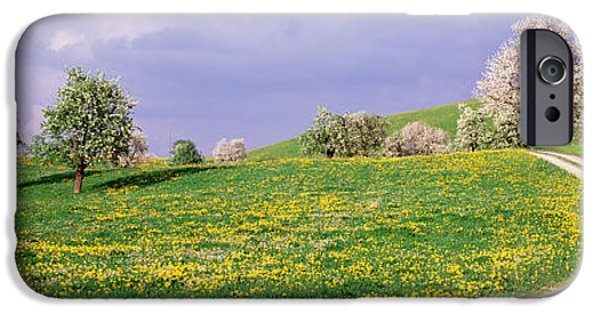Meadow Photographs iPhone Cases - Dirt Road Through Meadow Of Dandelions iPhone Case by Panoramic Images