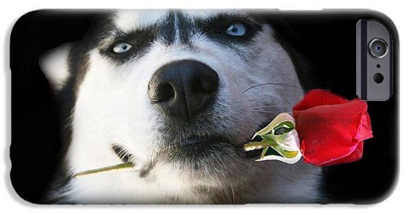 Huskies Photographs iPhone Cases - Do you Tango iPhone Case by Stephanie Laird