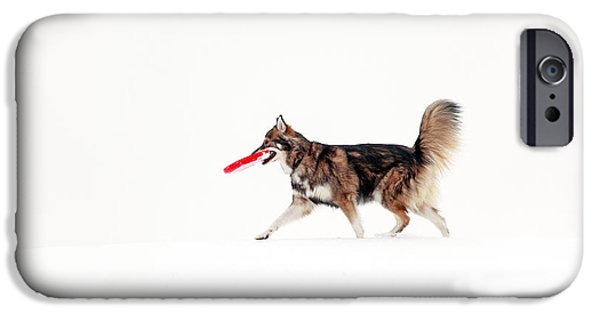 Dog In Snow iPhone Cases - Dog in the snow iPhone Case by Grant Glendinning