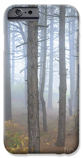 Sod iPhone Cases - Dolly Sods Wilderness Autumn Fog iPhone Case by Thomas R Fletcher