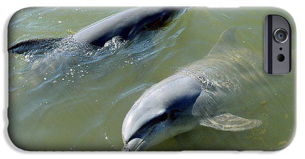 Sea Animals iPhone Cases - Dolphins In The Sea, Varadero, Matanzas iPhone Case by Panoramic Images
