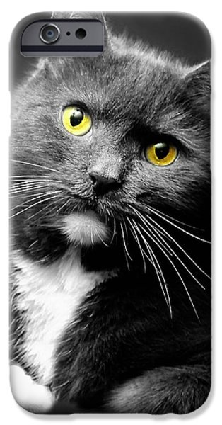 Domestic Short Hair Cat iPhone Cases - Domestic Gray and White Short Hair iPhone Case by Diana Angstadt