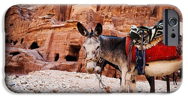 Jordan iPhone Cases - Donkey iPhone Case by Jelena Jovanovic
