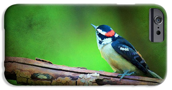 Cute Tree Images iPhone Cases - Downy Woodpecker iPhone Case by Darren Fisher