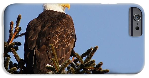 Flight iPhone Cases - Eagles Perch iPhone Case by Luke Froese