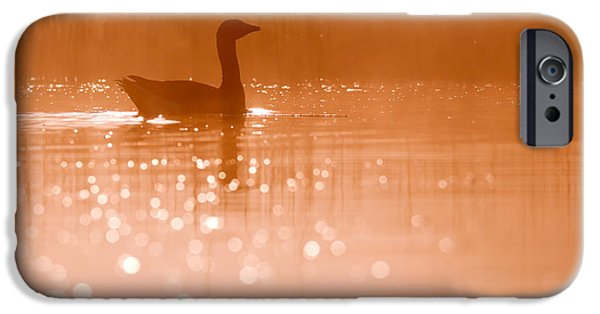 Birds iPhone Cases - Early Morning Magic iPhone Case by Roeselien Raimond