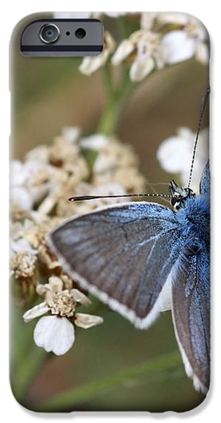 Eastern Baton Blue  iPhone Case by Amos Dor