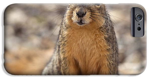 Fox Squirrel iPhone Cases - Eastern Fox Squirrel iPhone Case by Brandon Alms