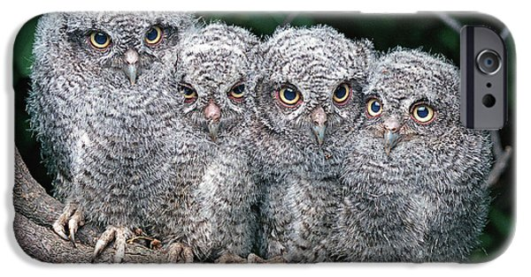Baby Bird iPhone Cases - Eastern Screech Owls iPhone Case by Ron Austing