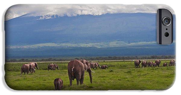 Elephants iPhone Cases - Elephant Walk in Kenya iPhone Case by Beth Wolff
