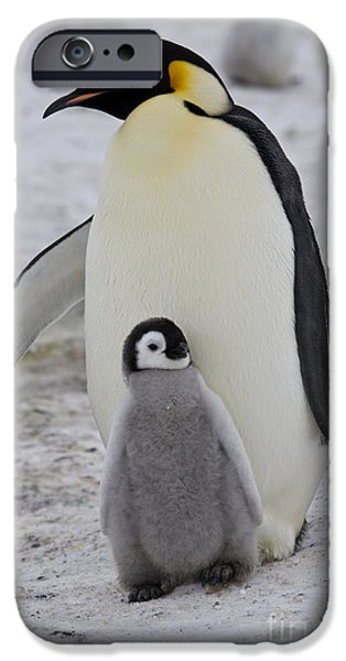 Baby Bird iPhone Cases - Emperor Penguin With Chick iPhone Case by Greg Dimijian