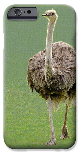 Emu iPhone Cases - Emu iPhone Case by Ellen Henneke