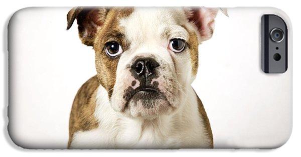 Dog Close-up iPhone Cases - English Bulldog iPhone Case by Johan De Meester