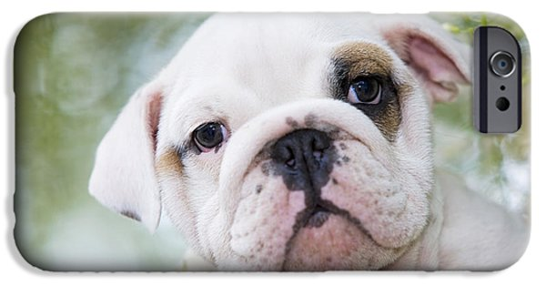 Recently Sold -  - Dog Close-up iPhone Cases - English Bulldog Puppy iPhone Case by Jean-Michel Labat