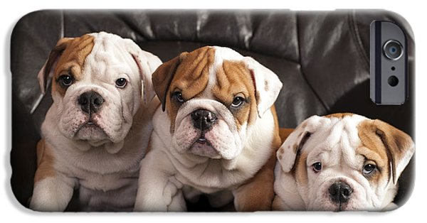 Recently Sold -  - Black Dog iPhone Cases - English bulldogs  iPhone Case by Borislav Stefanov