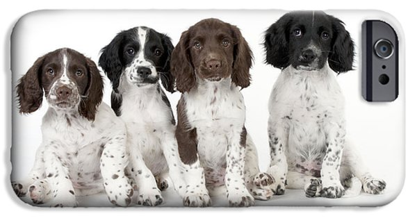 Cute Puppy iPhone Cases - English Springer Spaniel Puppies iPhone Case by John Daniels