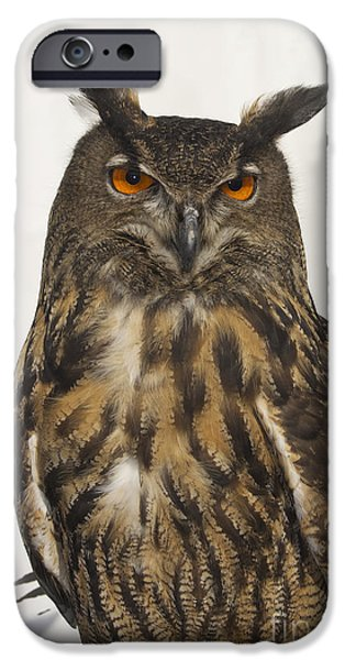Photos Of Birds iPhone Cases - Eurasion Eagle Owl iPhone Case by Skip Willits