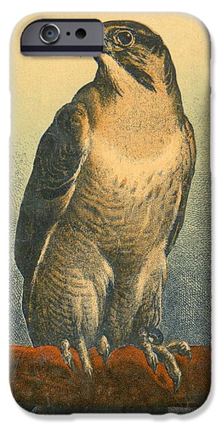 Birds iPhone Cases - Falcon iPhone Case by Sir Edwin Landseer