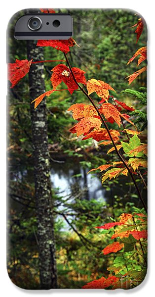 Autumn iPhone Cases - Fall forest and river iPhone Case by Elena Elisseeva