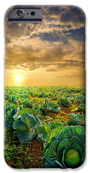 Harvest Art iPhone Cases - Fall Harvest iPhone Case by Phil Koch