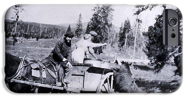 Horse And Buggy iPhone Cases - Feeding Bear Yellowstone National Park iPhone Case by NPS Photo