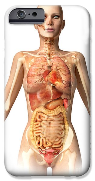 Sigmoid Colon iPhone Cases - Female Body With Bone Skeleton iPhone Case by Leonello Calvetti