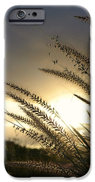 Silhoette iPhone Cases - Field Of Dreams iPhone Case by Laura  Fasulo