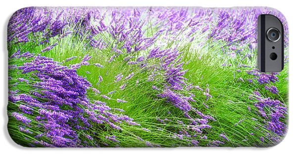 Agriculture iPhone Cases - Field of Lavender iPhone Case by Dee Browning