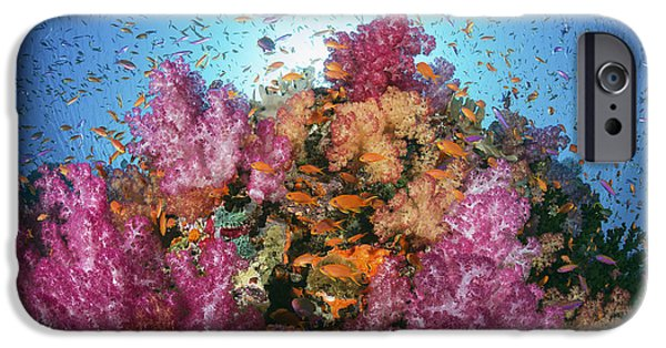 David iPhone Cases - Fiji, Alconarian And Gorgonian Coral With Schooling Anthias. iPhone Case by Dave Fleetham