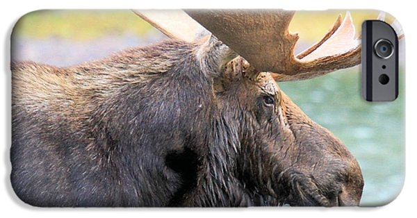 Moose In Water iPhone Cases - Fishercap Lunch iPhone Case by Adam Jewell