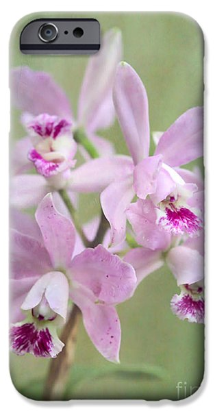 Floral Photographs iPhone Cases - Five Beautiful Pink Orchids iPhone Case by Sabrina L Ryan