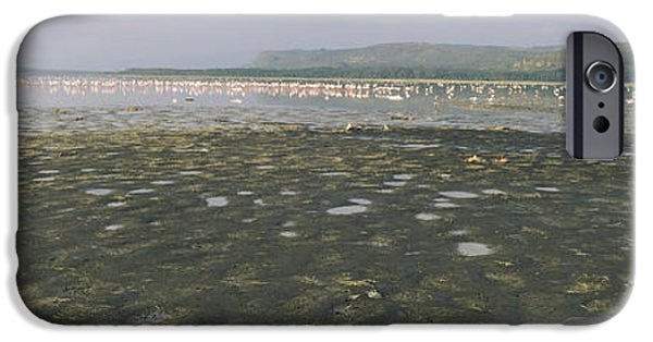 Alga iPhone Cases - Flock Of Flamingos In A Lake, Lake iPhone Case by Panoramic Images
