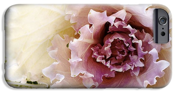 Flora iPhone Cases - Flower iPhone Case by Les Cunliffe