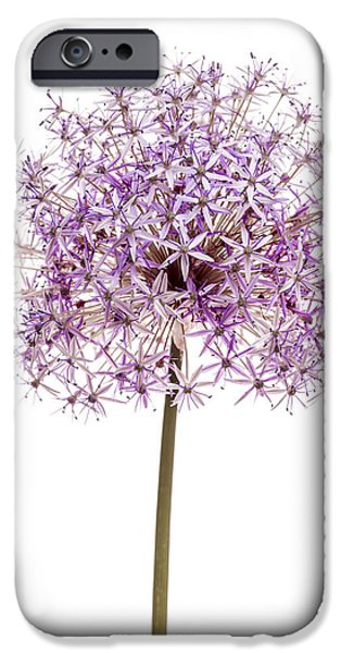 Alliums iPhone Cases - Flowering onion iPhone Case by Elena Elisseeva