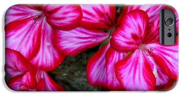 Botanical Pyrography iPhone Cases - Flowers in Botanic garden Dublin iPhone Case by Ilona Asaciova