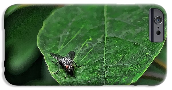 Bugs Pyrography iPhone Cases - Fly on Leaf iPhone Case by Jeffrey Platt