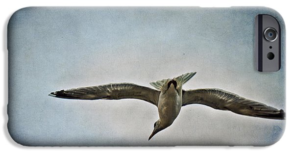 Flying Seagull Mixed Media iPhone Cases - Flying iPhone Case by Angela Doelling AD DESIGN Photo and PhotoArt