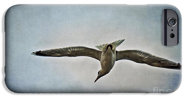 Flying Seagull iPhone Cases - Flying iPhone Case by Angela Doelling AD DESIGN Photo and PhotoArt