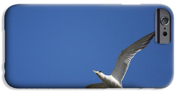 Flying Seagull iPhone Cases - Flying Crested Tern iPhone Case by Ryan Jorgensen