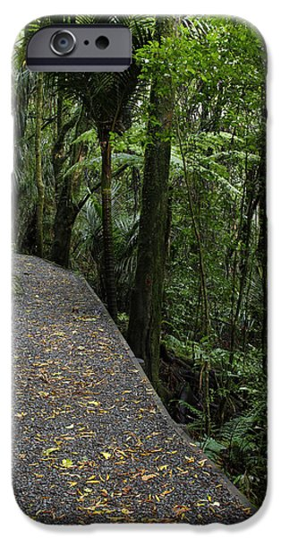 Pathway iPhone Cases - Forest walk iPhone Case by Les Cunliffe