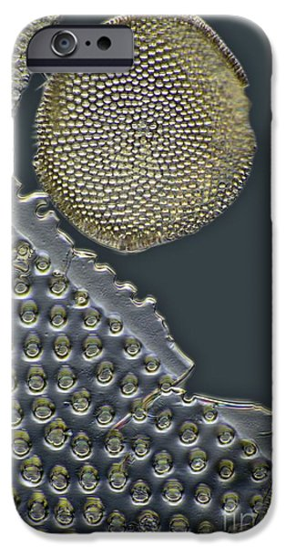 Striae iPhone Cases - Fossil Diatoms, Light Micrograph iPhone Case by Frank Fox