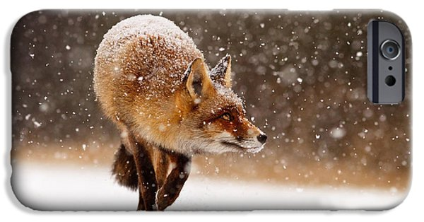 Wild Animals iPhone Cases - Fox First Snow iPhone Case by Roeselien Raimond
