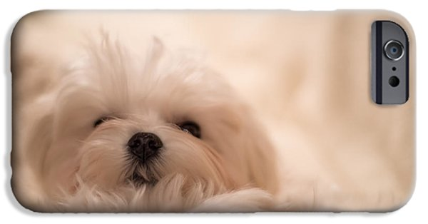 Cute Puppy iPhone Cases - Fresh From A Long Winters Nap iPhone Case by Lois Bryan