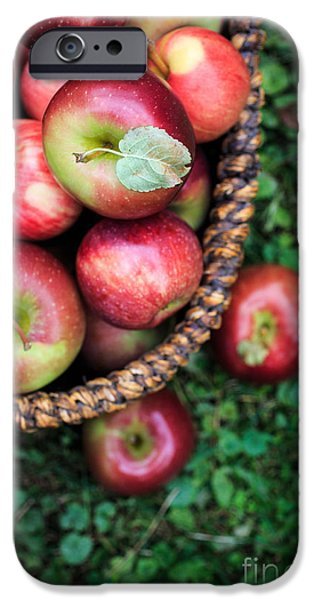Agricultural iPhone Cases - Fresh picked apples iPhone Case by Edward Fielding